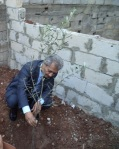 the palestinian consul planting olive tree